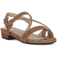 Παπούτσια Γυναίκα Σανδάλια / Πέδιλα Frau CAMOSCIO NERO Nero