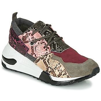 Παπούτσια Γυναίκα Χαμηλά Sneakers Steve Madden CLIFF Multicolour