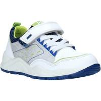 Παπούτσια Παιδί Χαμηλά Sneakers Primigi 5381500 λευκό