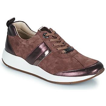 Παπούτσια Γυναίκα Χαμηλά Sneakers JB Martin KAP Poudré
