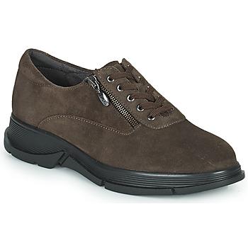 Παπούτσια Γυναίκα Χαμηλά Sneakers Scholl BRISTOL ZIP Brown