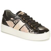 Παπούτσια Γυναίκα Χαμηλά Sneakers NeroGiardini BETTO Black / Gold