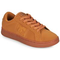 Παπούτσια Άνδρας Χαμηλά Sneakers DC Shoes STRIKER Camel