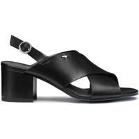 Παπούτσια Γυναίκα Σανδάλια / Πέδιλα Alberto Guardiani AGW003405 Μαύρος