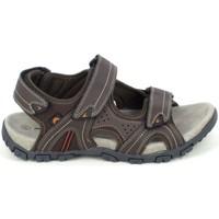 Παπούτσια Άνδρας Σανδάλια / Πέδιλα Elementerre Akka Marron Brown