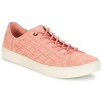 Παπούτσια Γυναίκα Χαμηλά Sneakers Toms LENOX Bloom